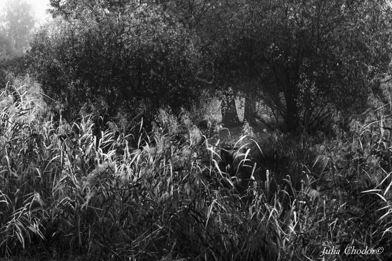 Dolinka Sluzewiecka, back and white photography, nature, prints for sale - Julia Chodor