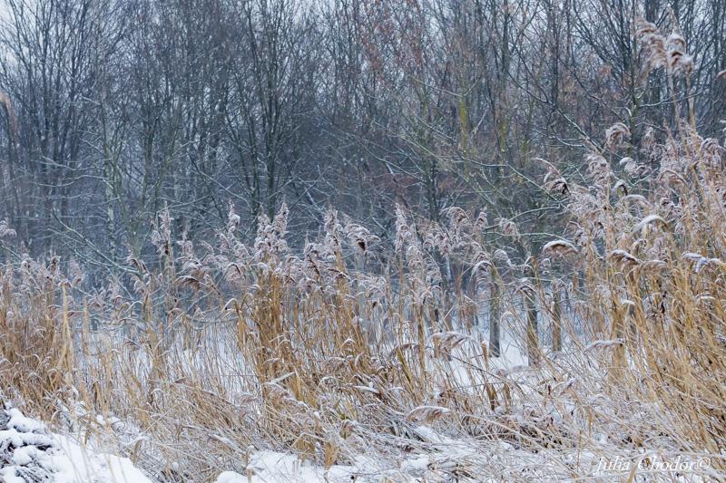 winter, landscape, art photography - Julia Chodor Photography
